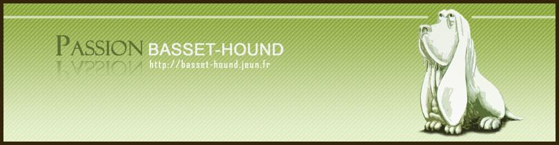 Passion Basset-Hound
