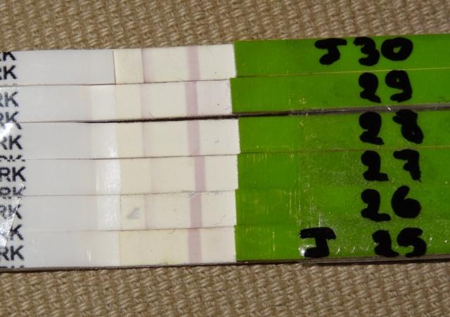 photo de mes test d 39 ovulation qu 39 en pensez vous d sir d 39 enfant forum grossesse b b. Black Bedroom Furniture Sets. Home Design Ideas
