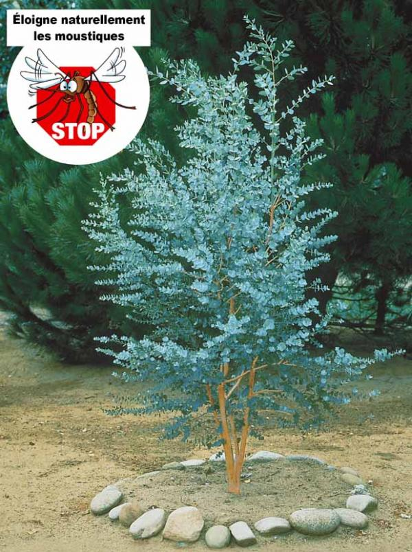 Blabla jardinage achats d co etc 2 page 5 for Arbre a feuillage persistant croissance rapide