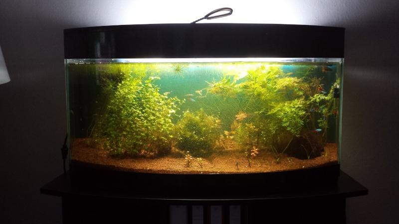 Refonte 90l amazonien pb algues page2 for Bulleur pour bocal