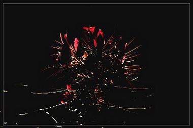 Coeur d'épines dans Mes mots sur les photos de Silence coeur_10