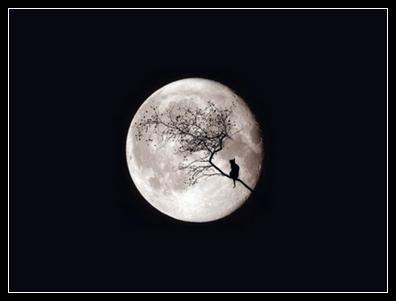 Mes mots à la lune dans Émoi tumblr10