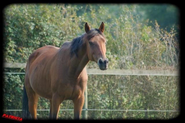 cheval17 dans Mes coups de coeur...