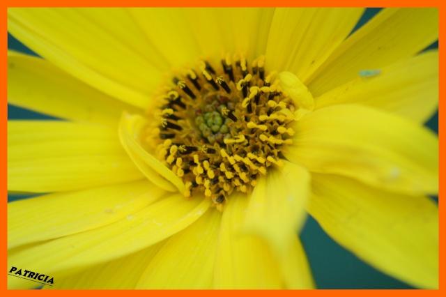fleur110 dans MWA, ma FamiLle, Mes aMiS