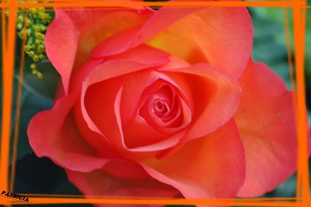 rose_o10 dans MWA, ma FamiLle, Mes aMiS