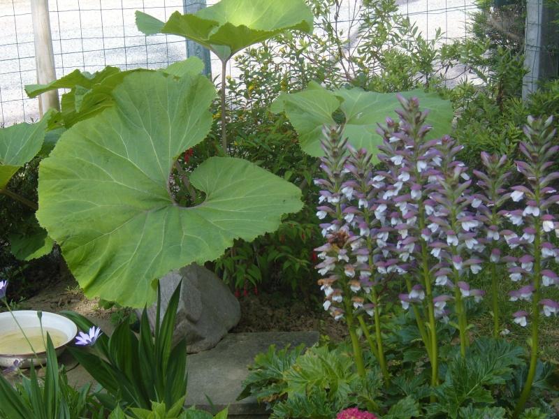 L 39 unvivers des plantes et jardins aquatiques for Plante vivace exterieur