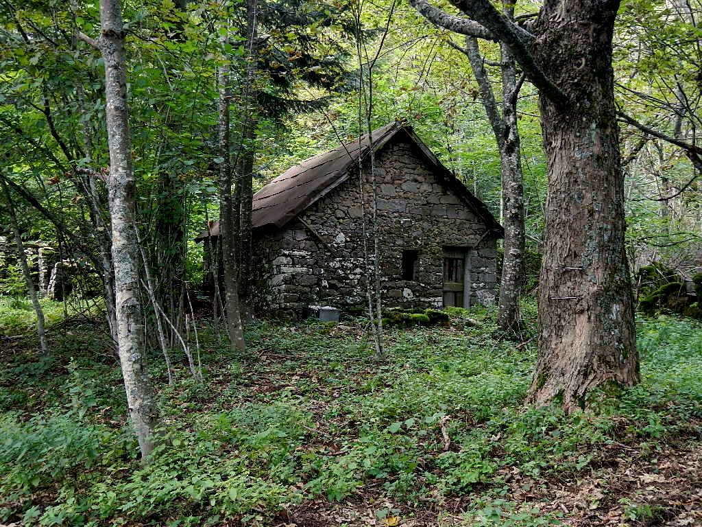 U pa se ina ca intu boscu di andrea capano for Case moderne nei boschi
