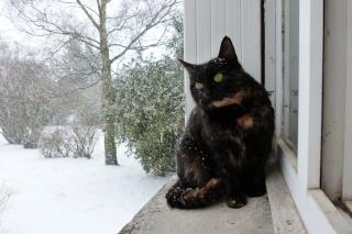 Neige, neige...neige !  dans Message du jour 02110