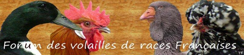 Races de volailles françaises
