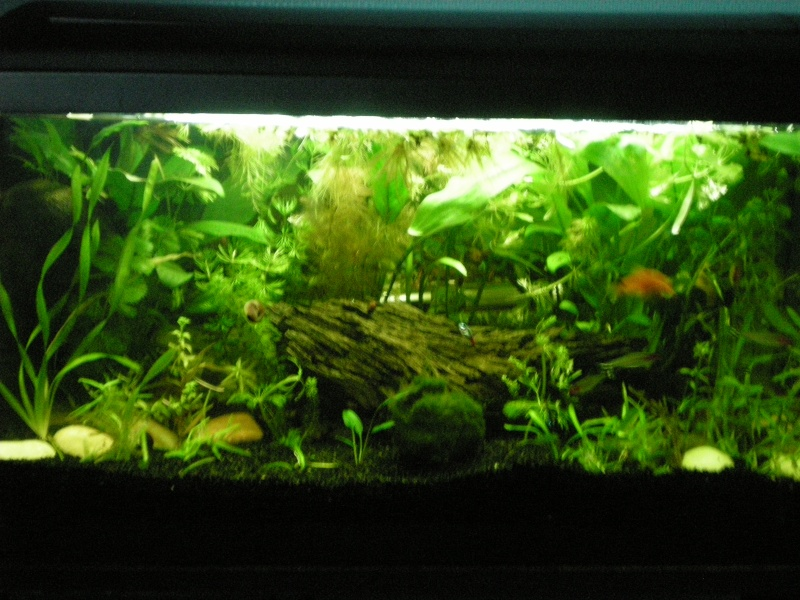 Les photos de nos aquariums cr ation d 39 aquarium eau for Decoration pour aquarium d eau douce