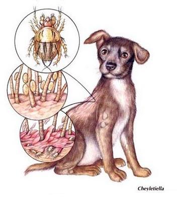enfermedad piel perro: