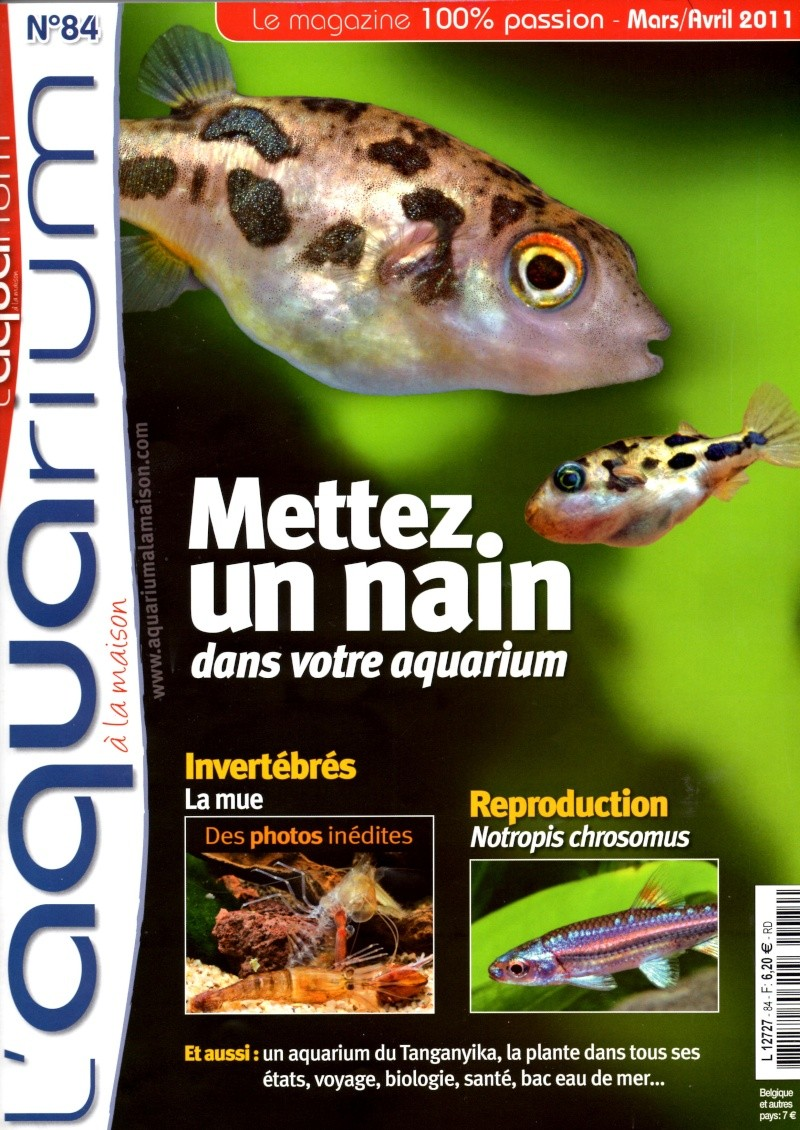 L 39 aquarium la maison n 84 mars avril 2011 for Aquarium a la maison pdf