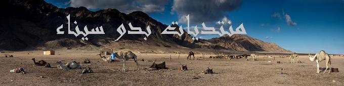 منتدى بدو سيناء