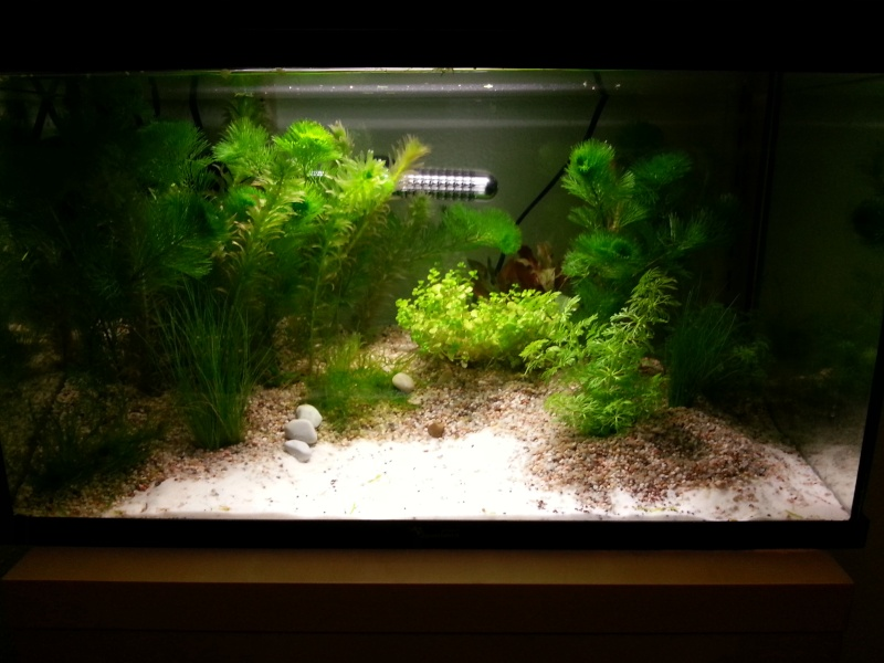 am 233 nagement d un aquarium de 50l
