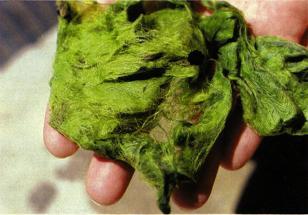 algues15.jpg