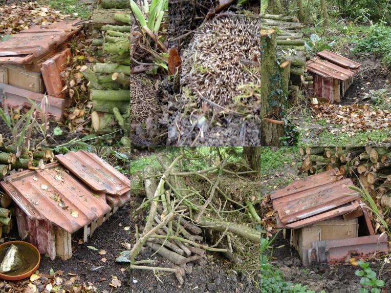 Les abris h rissons for Maison pour herisson jardin