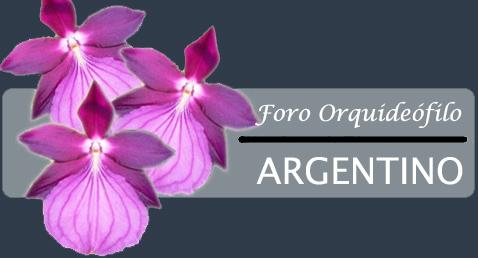 FORO DE ORQUIDÉOFILOS ARGENTINOS