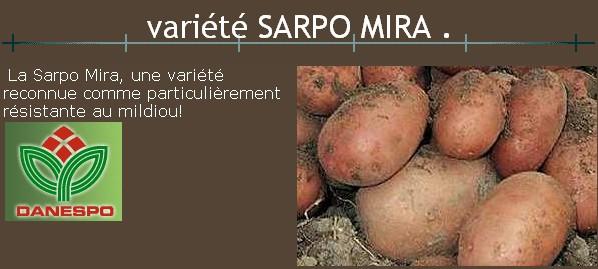 Tout savoir de la pomme de terre - Date plantation pomme de terre ...