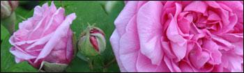 https://i76.servimg.com/u/f76/17/86/15/06/jardin10.jpg