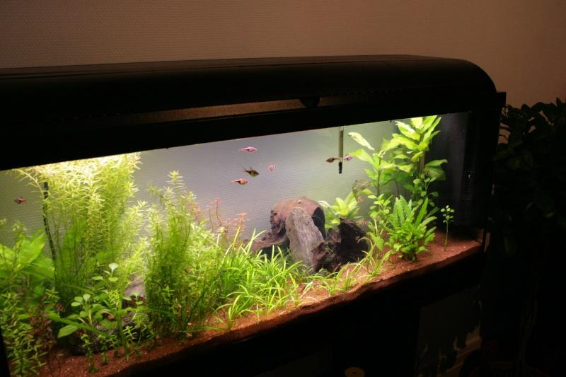 Conseil rampe aqualight for Couvercle pour aquarium