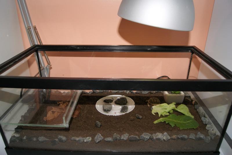 terrarium b b tortue. Black Bedroom Furniture Sets. Home Design Ideas