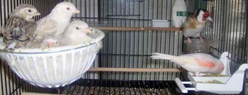 كل ما يخص طيور الزينة هنا