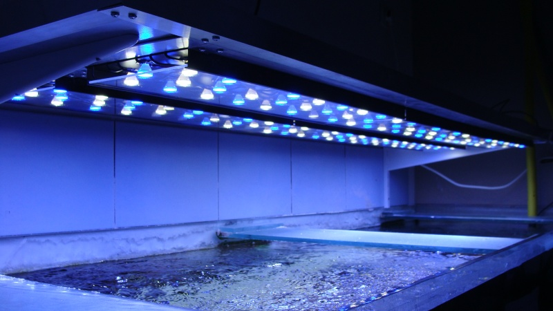 eclairage led aquarium images. Black Bedroom Furniture Sets. Home Design Ideas