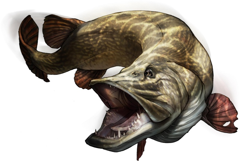 cool bass fishing wallpaper