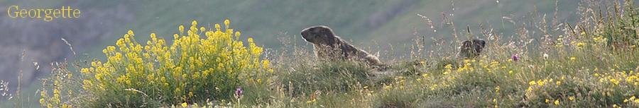 marmot11.jpg