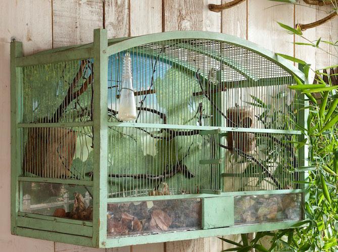 Construction d 39 une cage demande de conseil et avancement - Cage oiseau decorative interieur ...