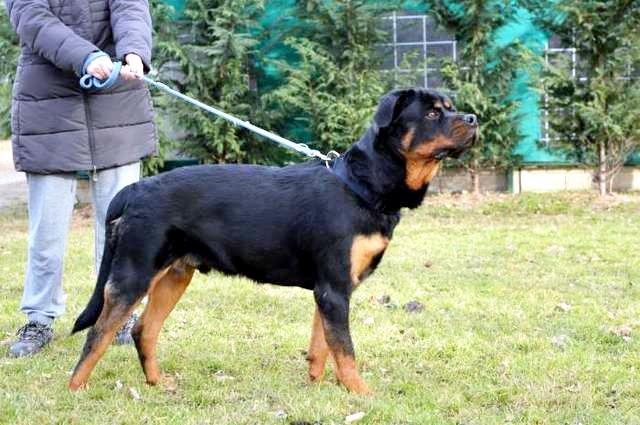 hund2_18.jpg