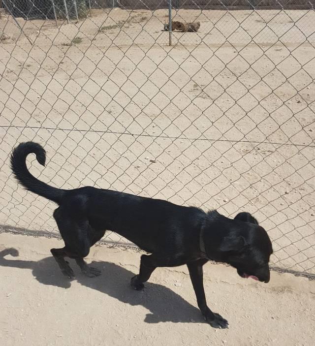 hund3_13.jpg